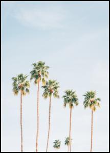 Bildverkstad Palm Trees Poster