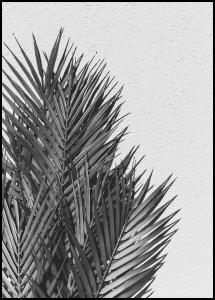 Bildverkstad Palm Leaves Poster