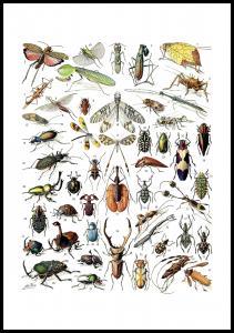 Lagervaror egen produktion Schoolposter insecten II Poster