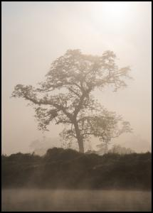 Lagervaror egen produktion Misty Tree Poster