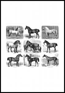 Bildverkstad Paardenrassen Poster