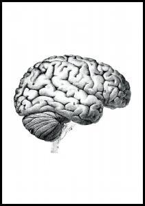 Lagervaror egen produktion Schoolposter hersenen Poster