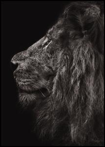 Bildverkstad Lion In Profile Poster