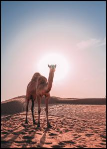 Bildverkstad Camel Poster