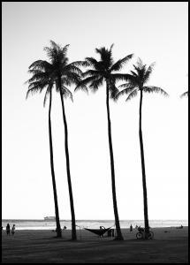 Bildverkstad Black And White Palm Trees Poster